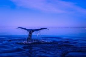 [Review] 고래의 안에는 우리의 세상이 있다 - 고래가 가는 곳 [도서]