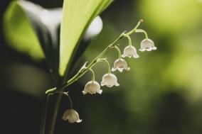 [Review] 침묵의 은방울꽃 - 멀티퍼퓸 슬리핑 듀