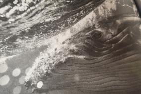 [Review] 거대한 자연이 있는 르포, 고래가 가는 곳