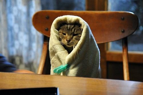 고양이단독.jpg