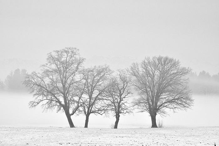 winter-3197059_960_720.jpg