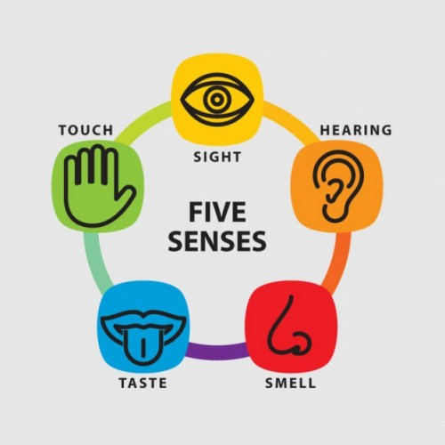 five-senses-icon-set_62147502195-500x500.jpg
