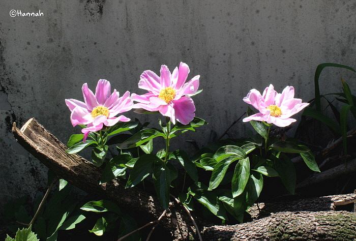 꽃이 피어있었다.jpg