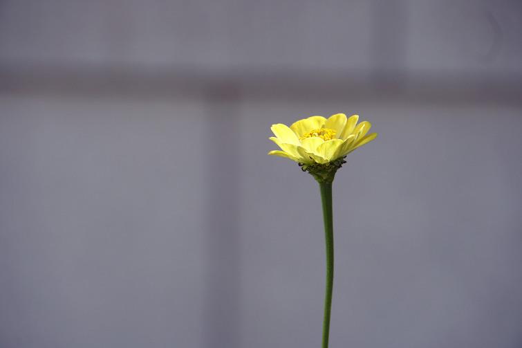 꽃 한송이.jpg