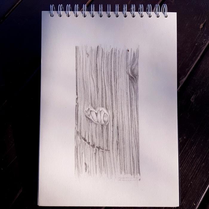 [크기변환][포맷변환]나뭇결2.jpg