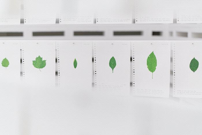 허윤희-나뭇잎 일기4 Diary of Leaves, Gouache on paper, each 29.7 x 21cm,2008-2018.jpg
