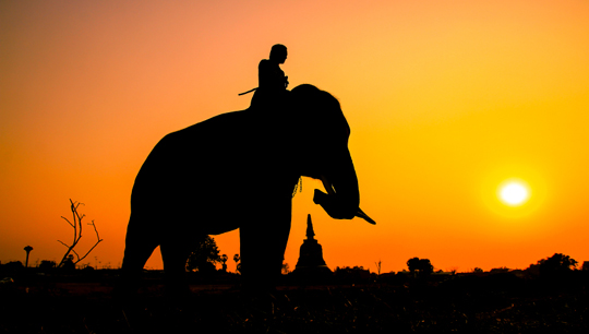 코끼리와_기수.jpg