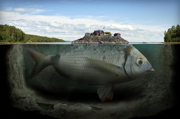 Fishy Island.jpg