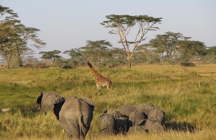크기변환__serengeti-park-tanzania.jpg