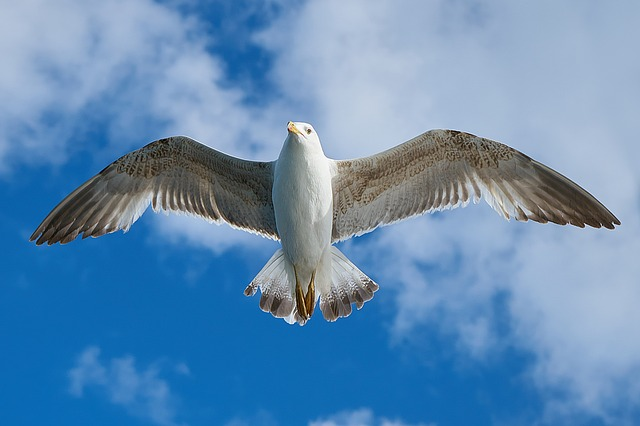 seagull-1511862_640.jpg
