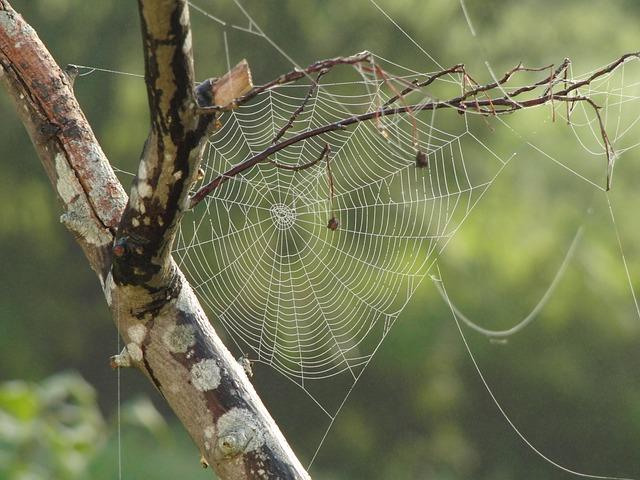 spider-web-617769_640.jpg
