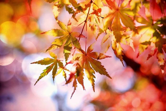 가을.jpg
