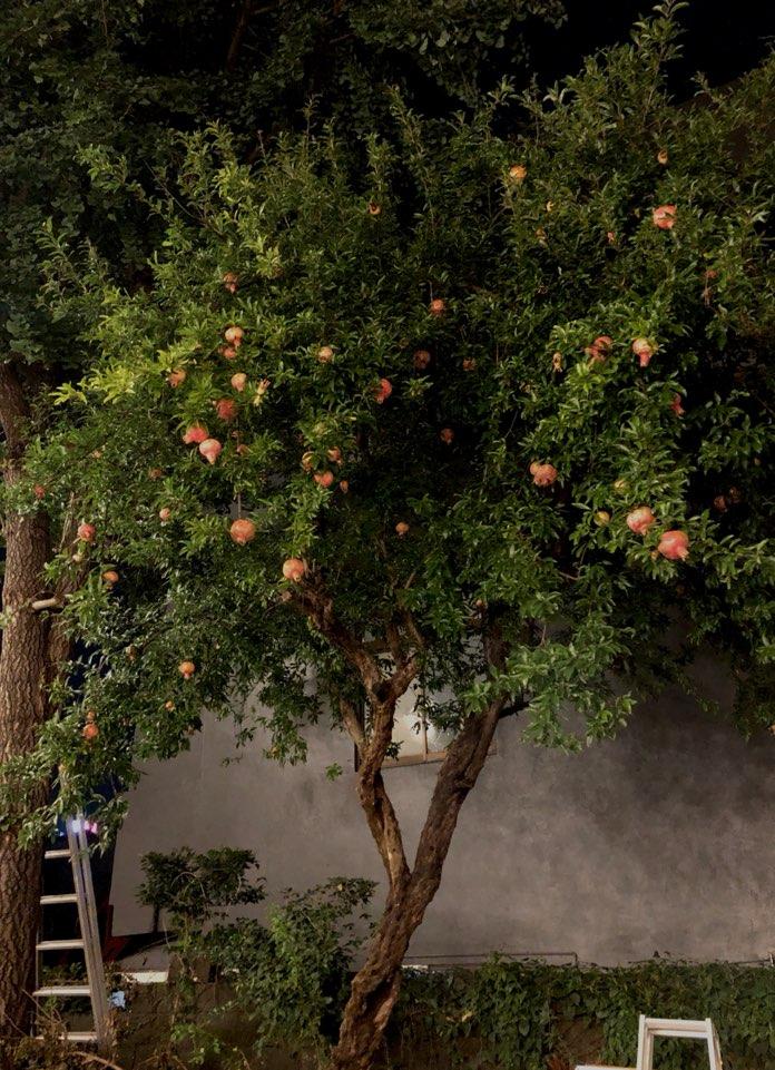 석류나무.jpg