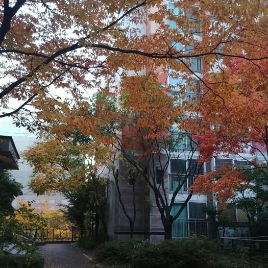 가을최종.jpg