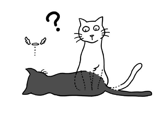 슈뢰딩거의_고양이.jpg