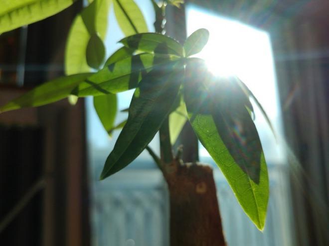 식물사진.jpg