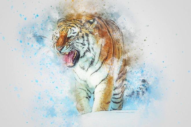 tiger-3497203_960_720.jpg