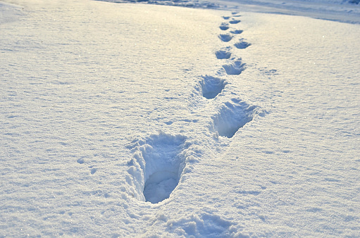 winter footprint.jpg
