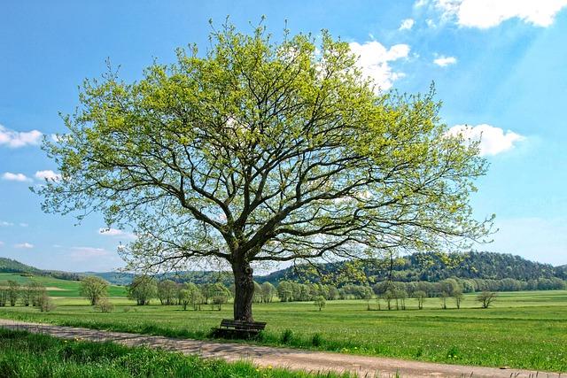 tree-4876602_640.jpg