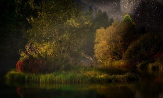 [크기변환]숲.jpg