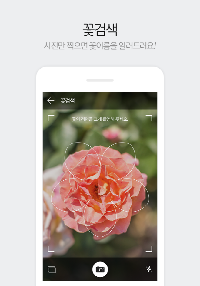 [크기변환]다음꽃검색.png