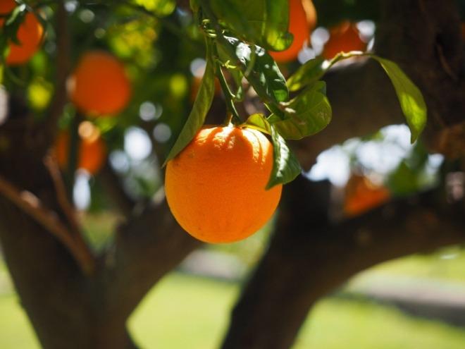 [크기변환]orange-1117645_1920.jpg