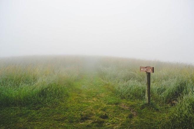 grass-1209945_1280.jpg