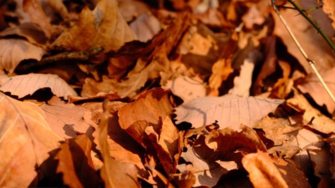 가을1.jpg