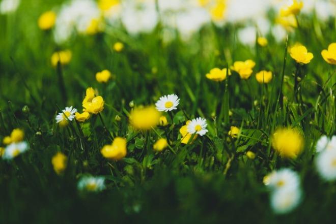 [크기변환]언니의 봄.jpg
