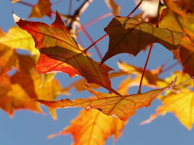 autumn-10484_640.jpg