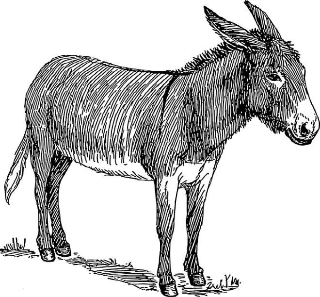 [꾸미기][크기변환][포맷변환]donkey-48287_960_720[1].jpg