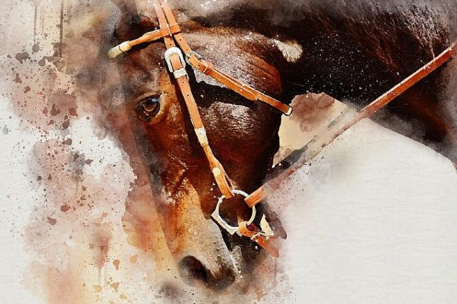 [꾸미기][크기변환][포맷변환]horse-1591536_960_720[1].jpg
