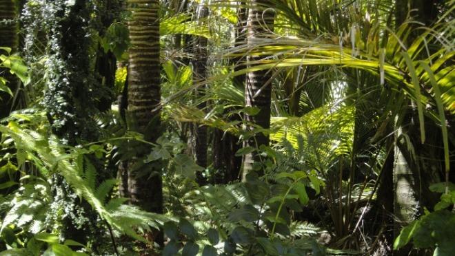 [크기변환]rainforest-78516_1920.jpg