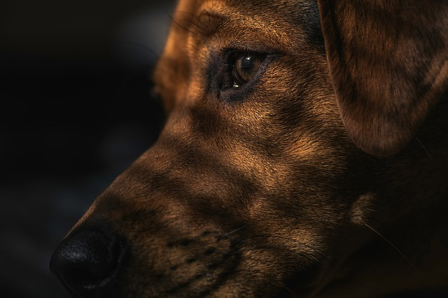 dog-1149188_640.jpg