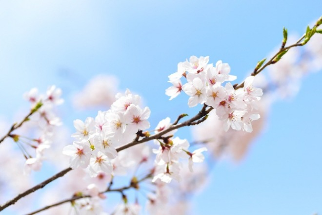 [크기변환]spring-2218771_1920.jpg
