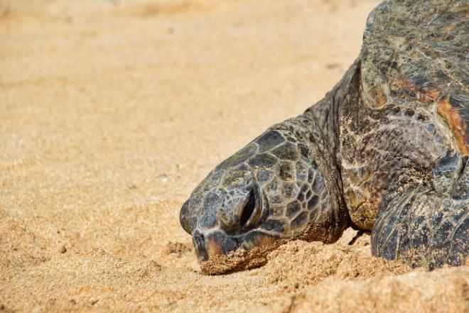[크기변환]거북이.jpg