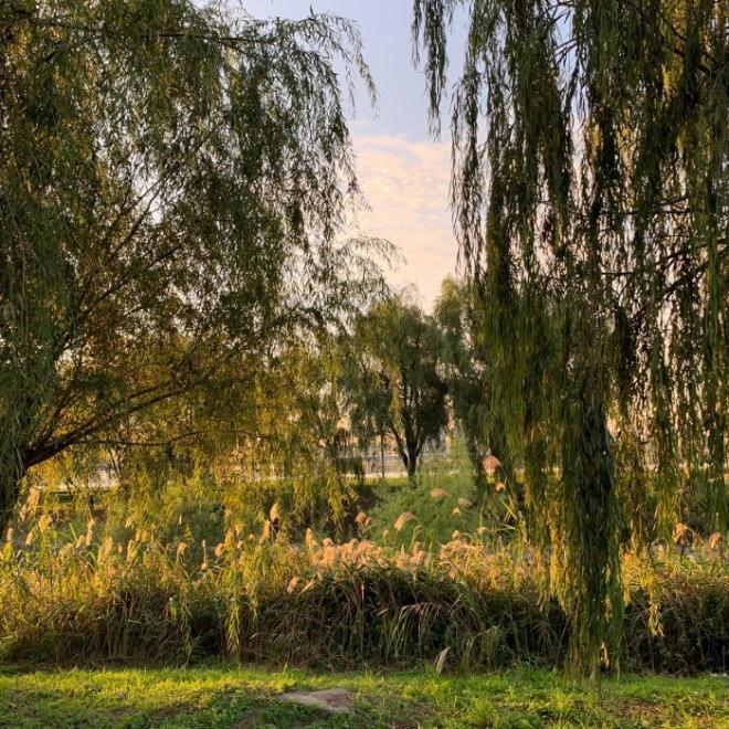 [크기변환]가을 한강.jpg