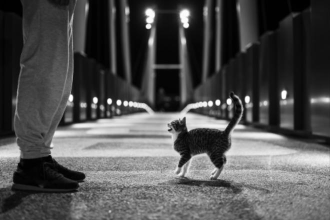 cat-5732087_1920.jpg