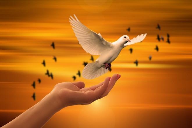 [크기변환]dove-3426159_1920.jpg