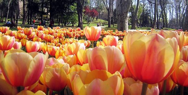 tulips-emirgan-park-istanbul-01.jpg